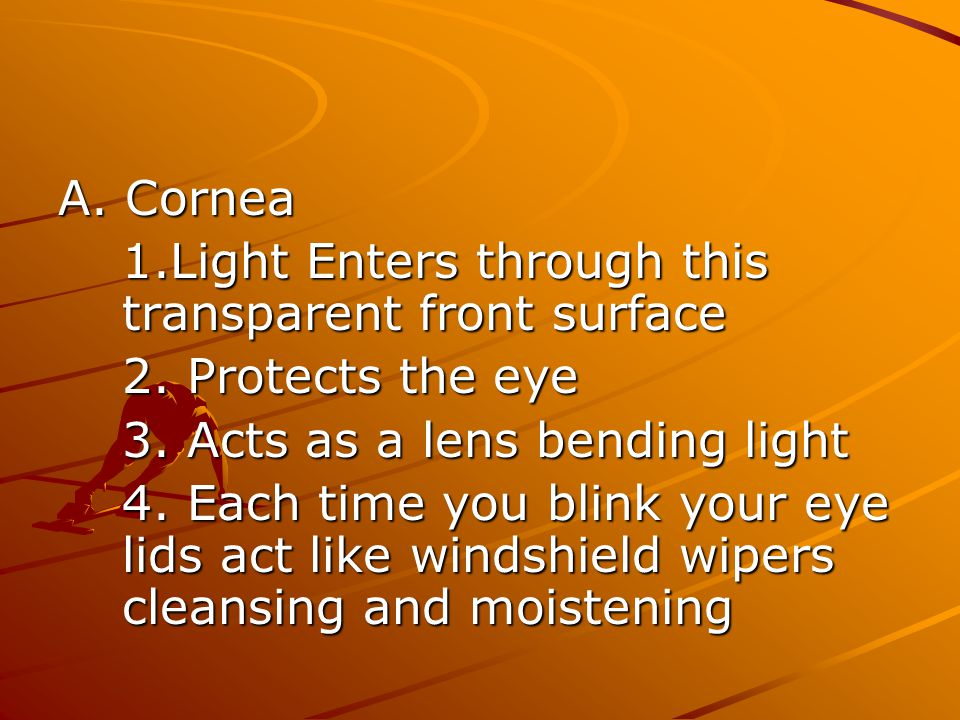 A. Cornea 1.Light Enters through this transparent front surface. 2. Protects the eye. 3. Acts as a lens bending light.