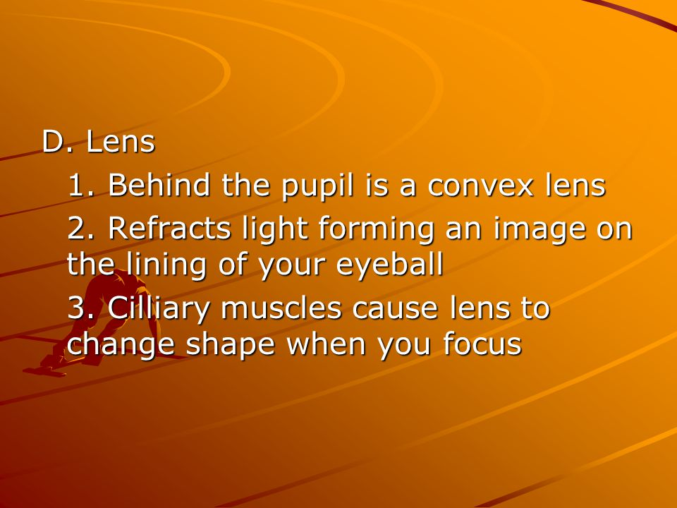 D. Lens 1. Behind the pupil is a convex lens. 2. Refracts light forming an image on the lining of your eyeball.