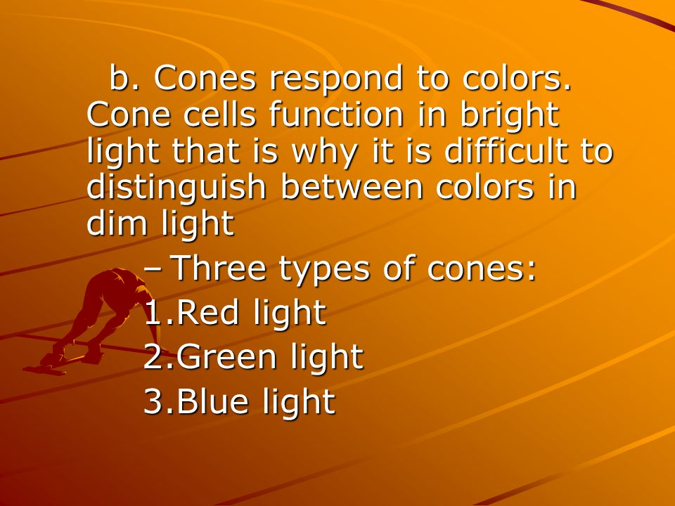 Three types of cones: Red light Green light Blue light