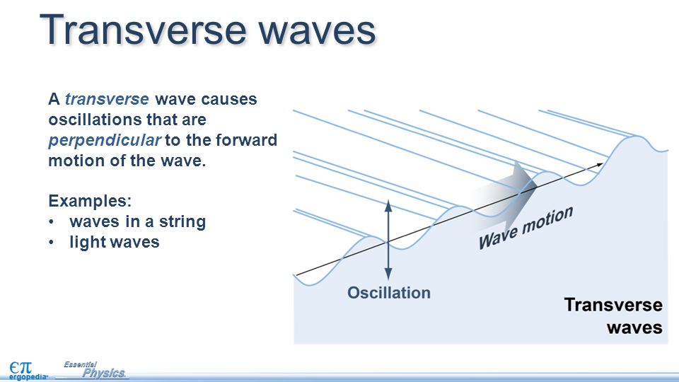 Transverse waves A transverse wave causes oscillations that are perpendicular to the forward motion of the wave.