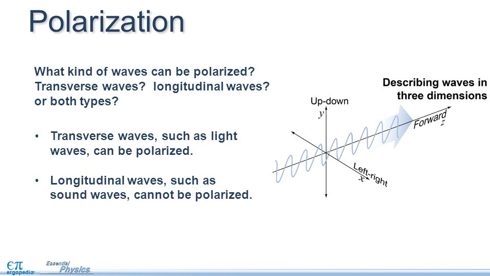 Polarization What kind of waves can be polarized Transverse waves longitudinal waves or both types