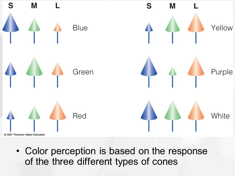 Color perception is based on the response of the three different types of cones