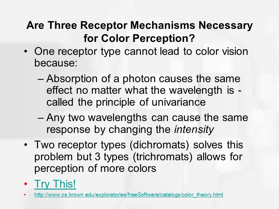 Are Three Receptor Mechanisms Necessary for Color Perception