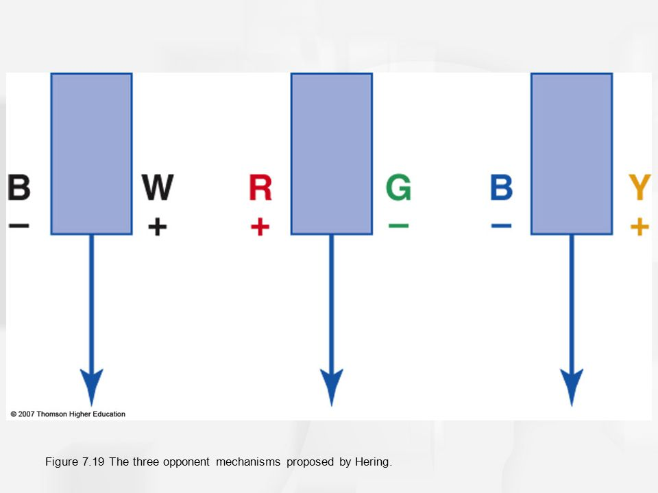 Figure 7.19 The three opponent mechanisms proposed by Hering.