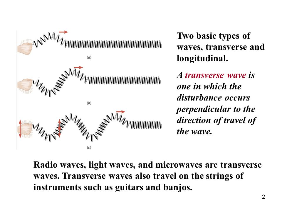 Two basic types of waves, transverse and longitudinal.