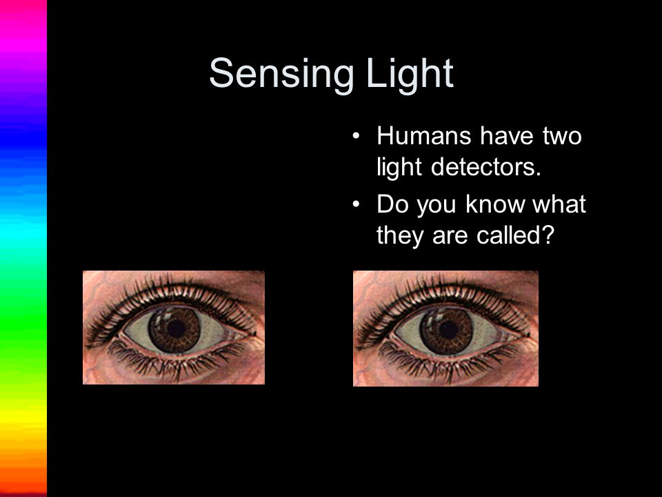 Sensing Light Humans have two light detectors.