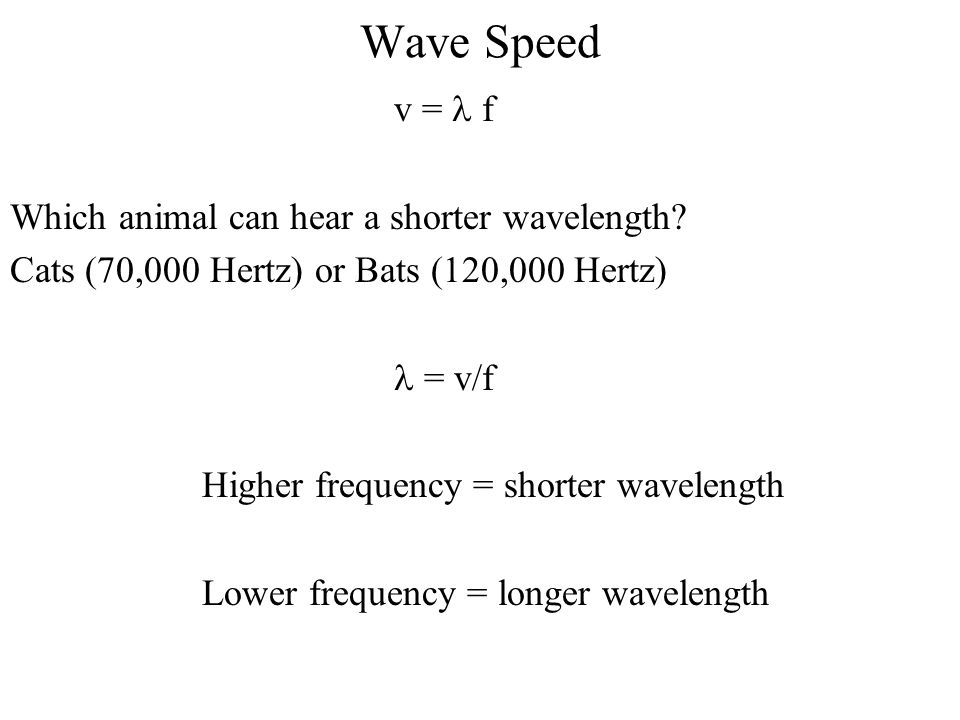 Wave Speed v = l f Which animal can hear a shorter wavelength