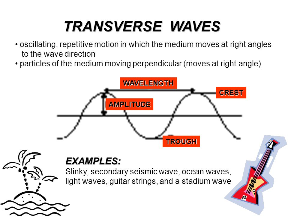 TRANSVERSE WAVES EXAMPLES: