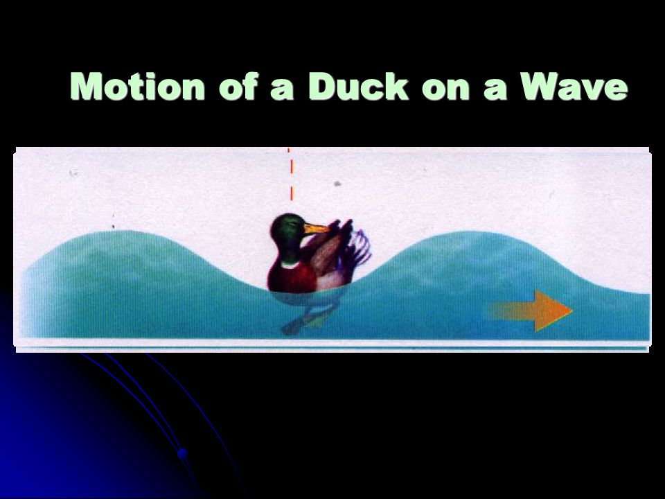 Motion of a Duck on a Wave