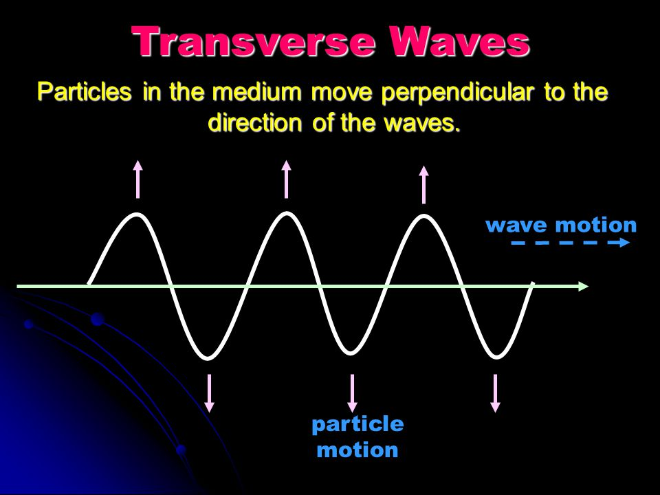 Transverse Waves Particles in the medium move perpendicular to the direction of the waves. wave motion.