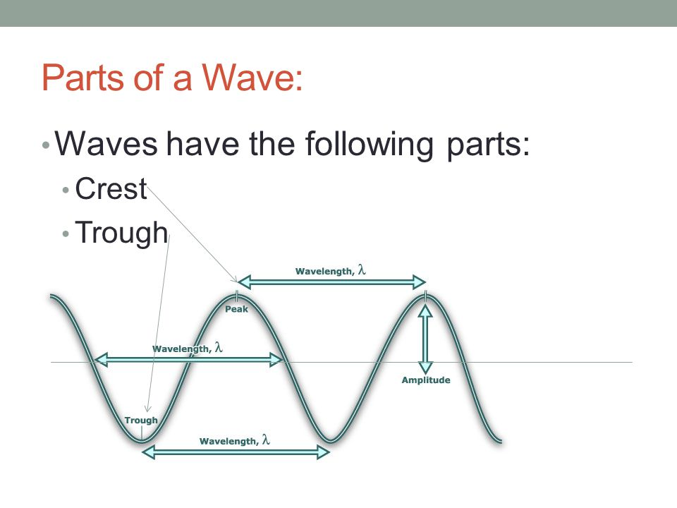 Parts of a Wave: Waves have the following parts: Crest Trough