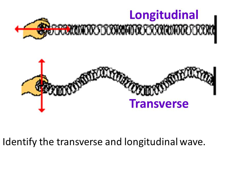 Longitudinal Transverse Identify the transverse and longitudinal wave.
