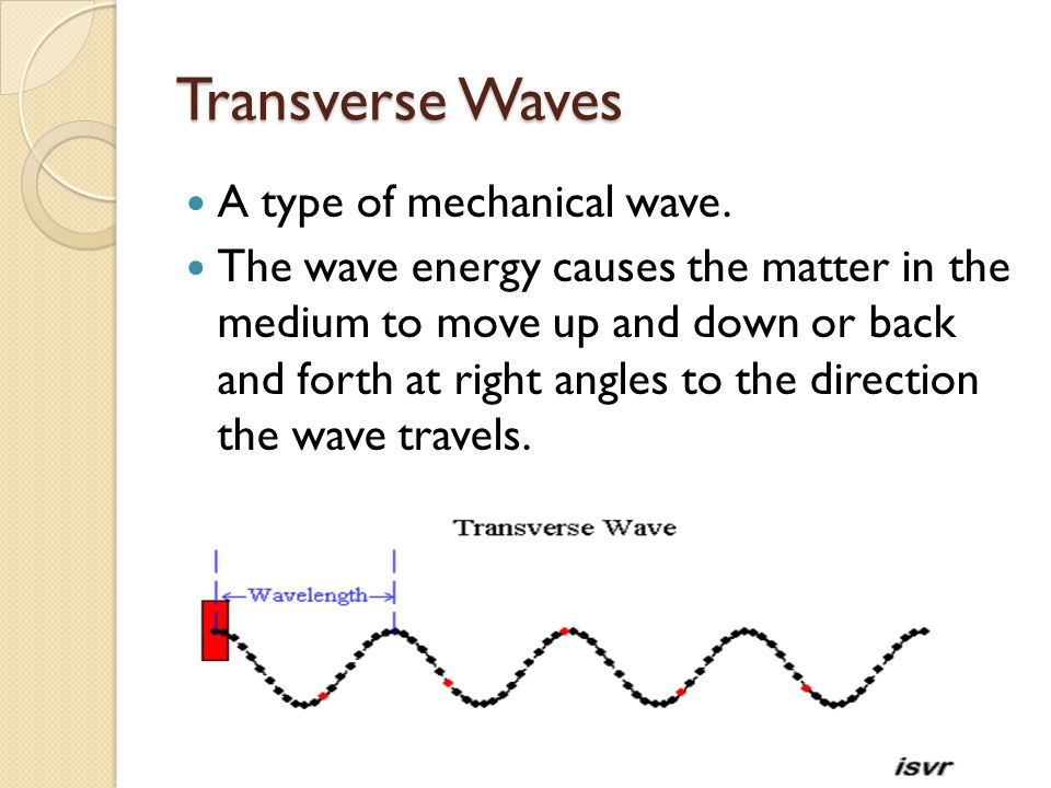 Transverse Waves A type of mechanical wave.
