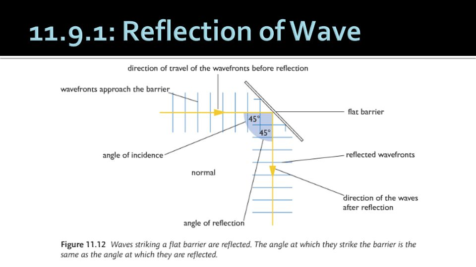 11.9.1: Reflection of Wave