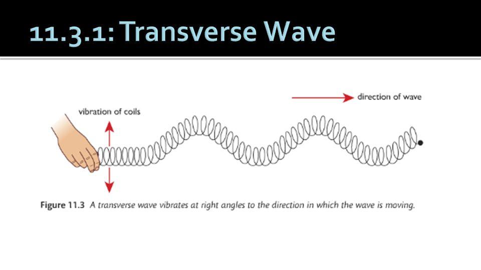 11.3.1: Transverse Wave