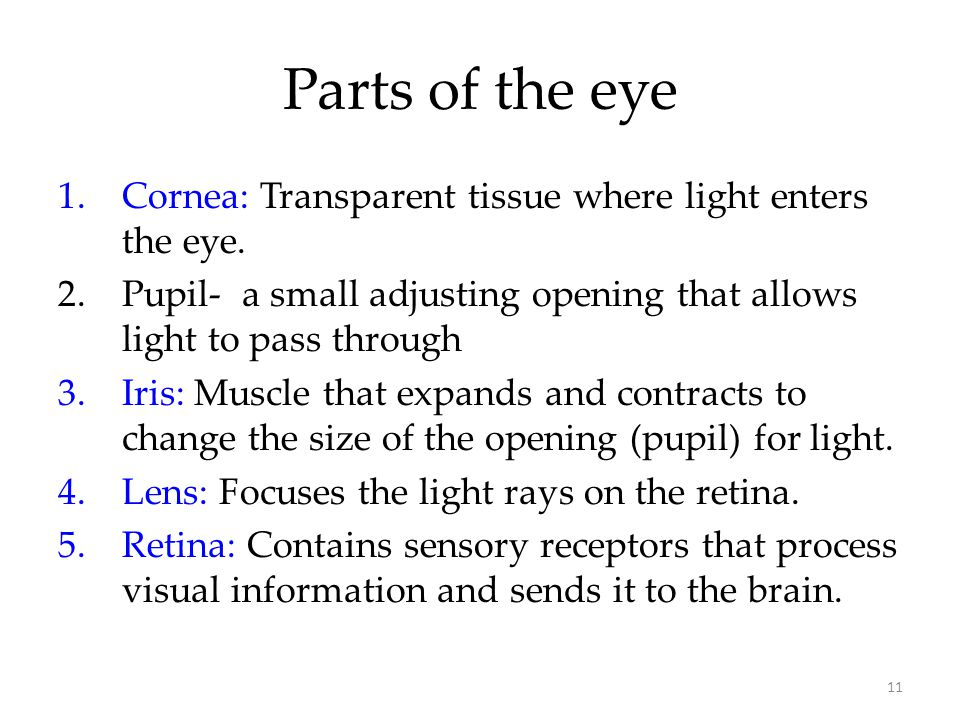Parts of the eye Cornea: Transparent tissue where light enters the eye. Pupil- a small adjusting opening that allows light to pass through.