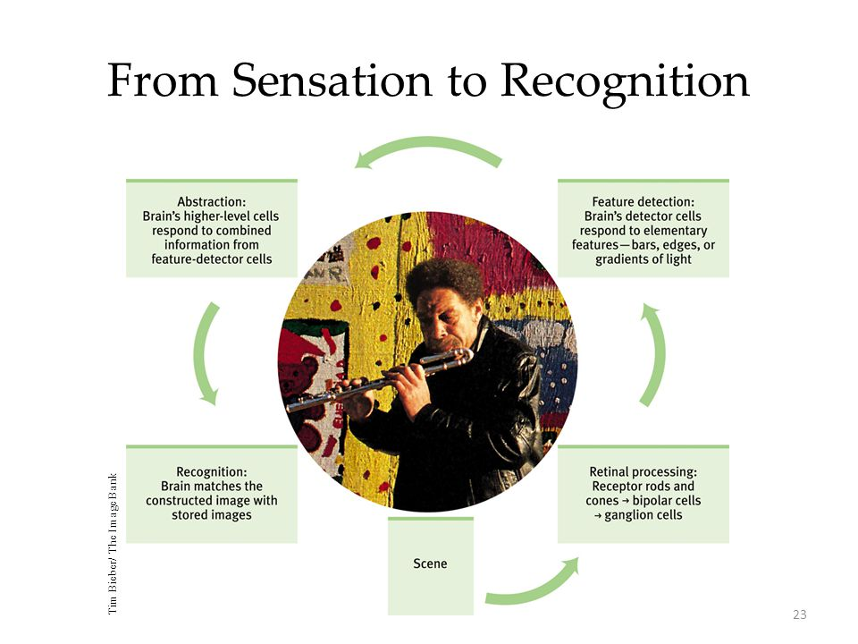 From Sensation to Recognition