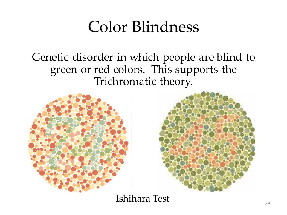 Color Blindness Genetic disorder in which people are blind to green or red colors. This supports the Trichromatic theory.