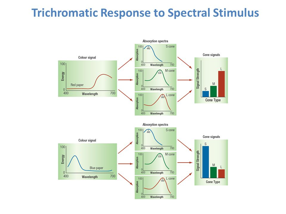 Trichromatic Response to Spectral Stimulus
