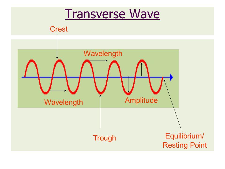 Transverse Wave Crest Wavelength Amplitude Wavelength Equilibrium/