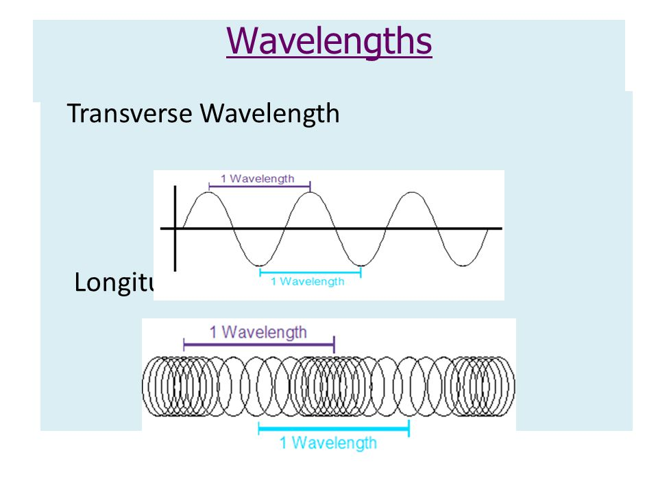 Wavelengths Transverse Wavelength Longitudinal Wavelength