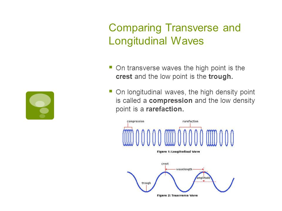 Comparing Transverse and Longitudinal Waves