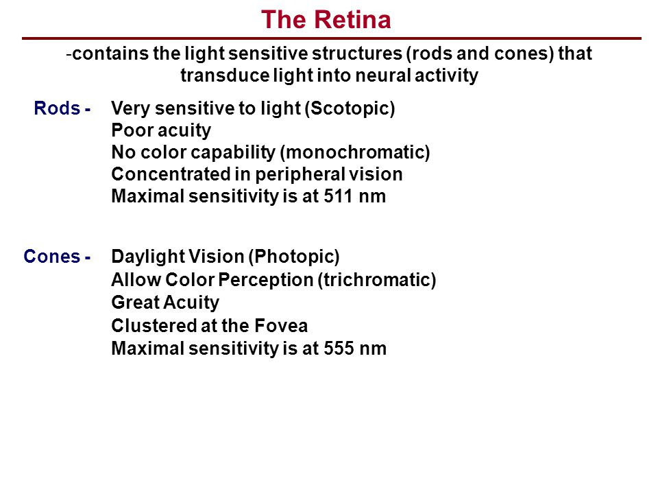 The Retina contains the light sensitive structures (rods and cones) that transduce light into neural activity.