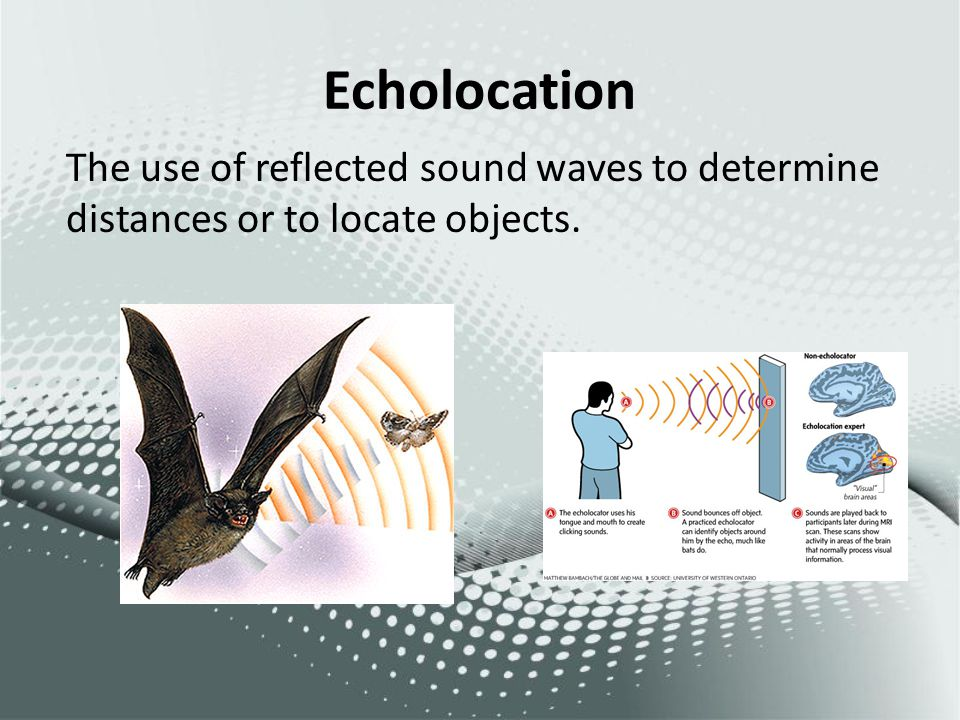 Echolocation The use of reflected sound waves to determine distances or to locate objects.