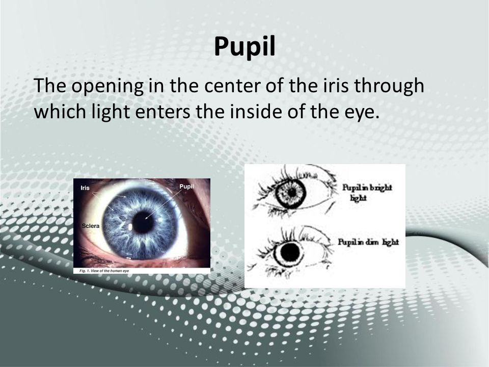 Pupil The opening in the center of the iris through which light enters the inside of the eye.