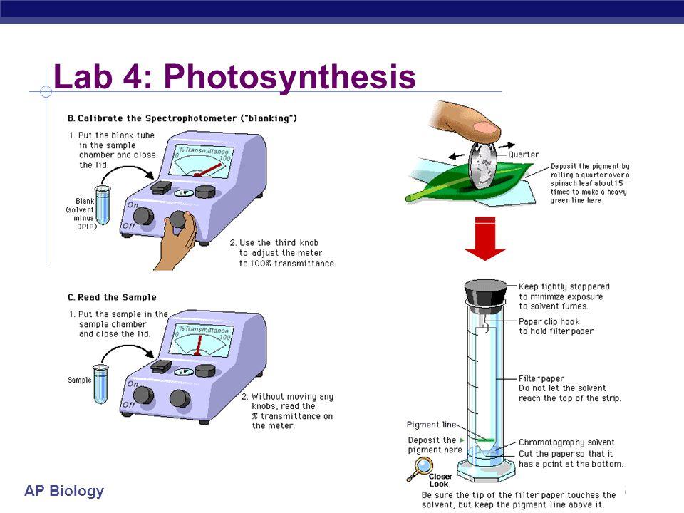 Lab 4: Photosynthesis 2004-2005