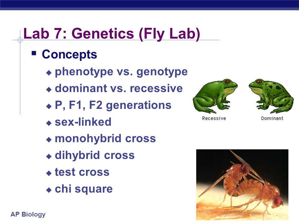 Lab 7: Genetics (Fly Lab)