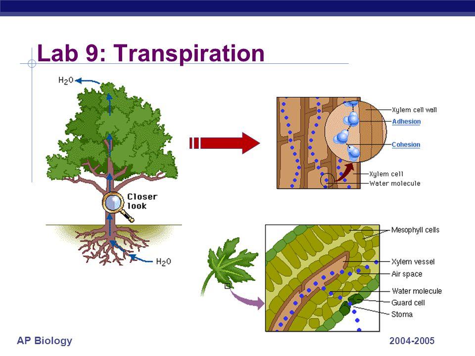 Lab 9: Transpiration 2004-2005