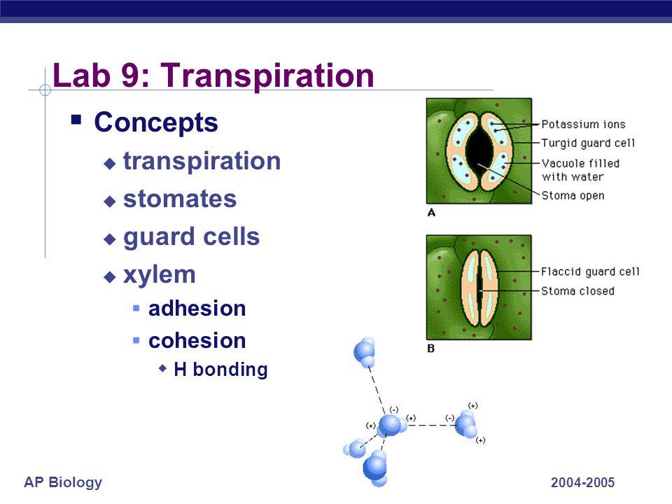 Lab 9: Transpiration Concepts transpiration stomates guard cells xylem