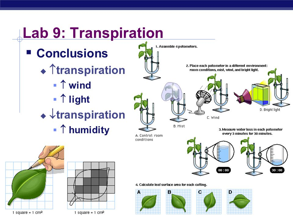 Lab 9: Transpiration Conclusions transpiration transpiration  wind