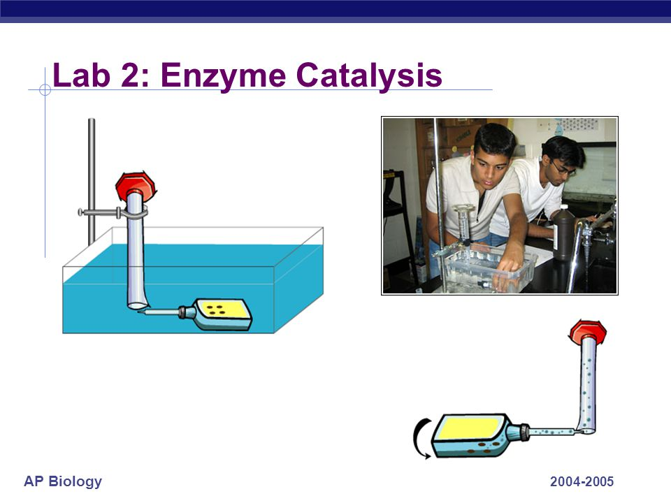 Lab 2: Enzyme Catalysis 2004-2005