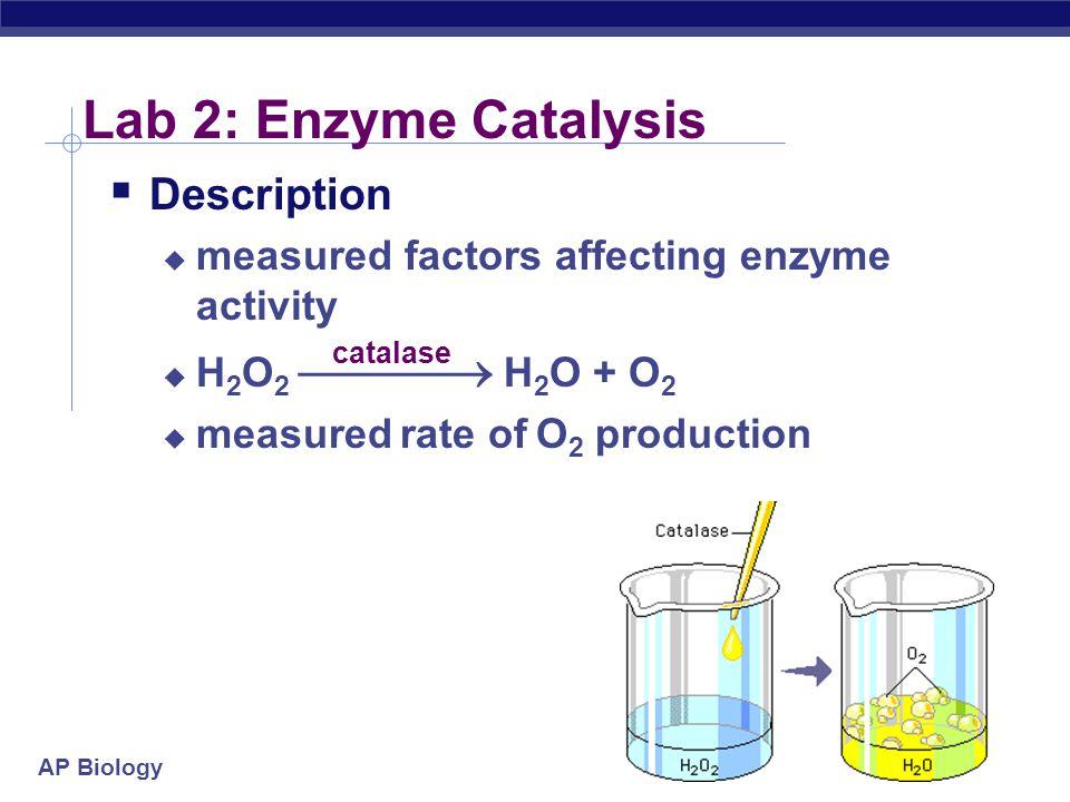 Lab 2: Enzyme Catalysis Description