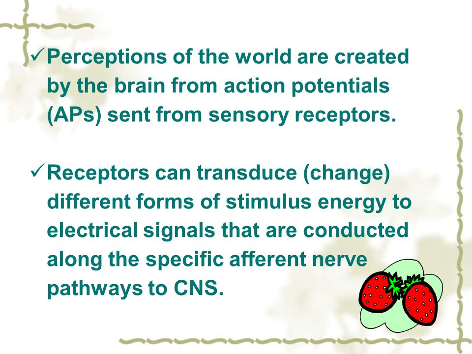 Perceptions of the world are created by the brain from action potentials (APs) sent from sensory receptors.