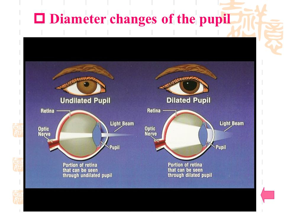 Diameter changes of the pupil