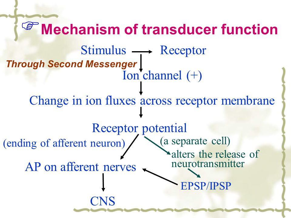 Mechanism of transducer function