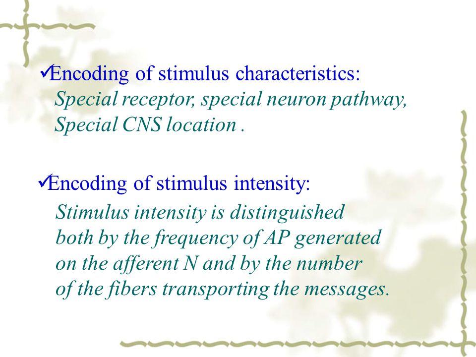 Encoding of stimulus characteristics:
