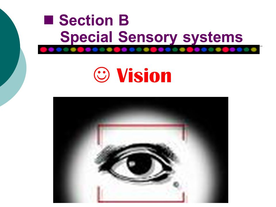 Section B Special Sensory systems Vision