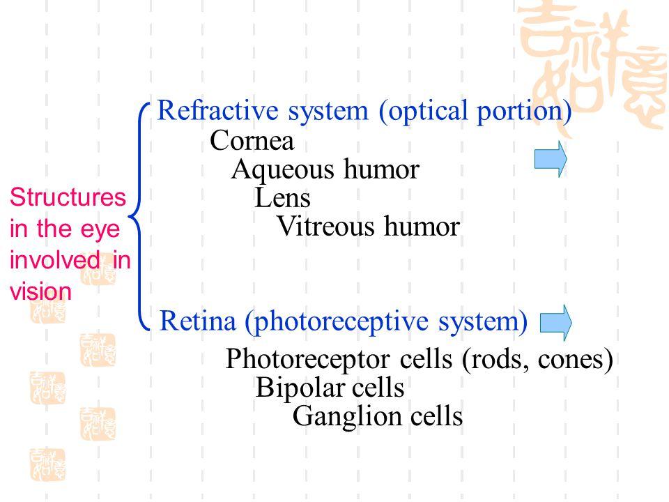 Refractive system (optical portion) Cornea Aqueous humor Lens