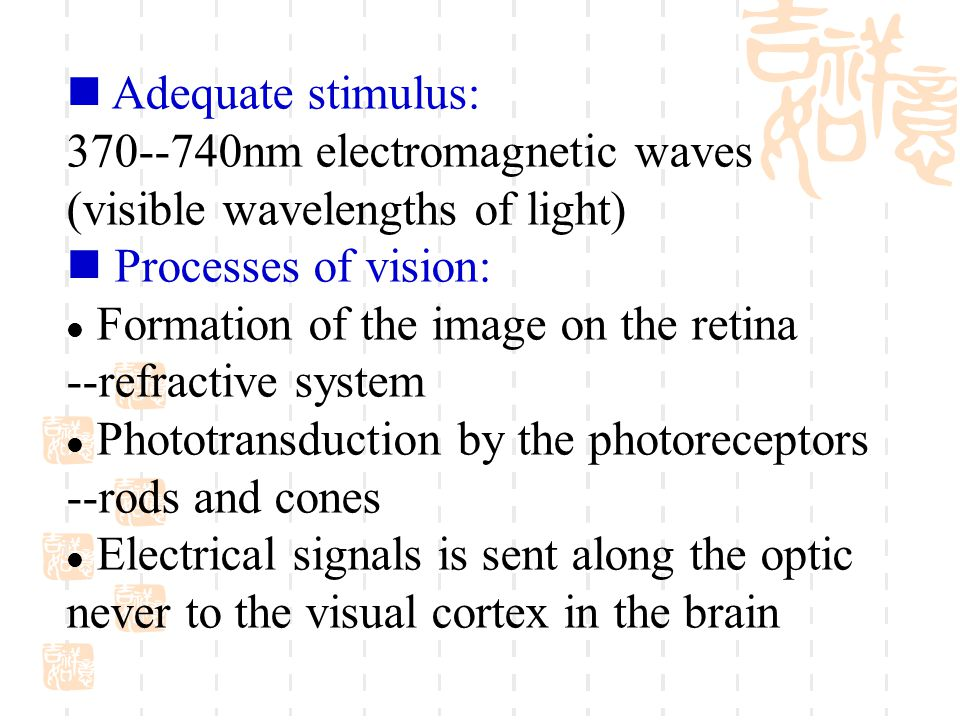 Adequate stimulus: 370--740nm electromagnetic waves. (visible wavelengths of light) Processes of vision: