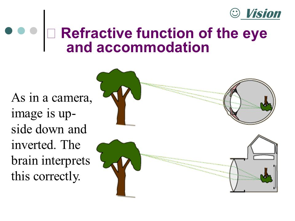 Ⅰ Refractive function of the eye and accommodation