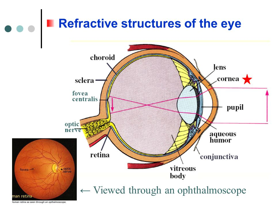 Refractive structures of the eye