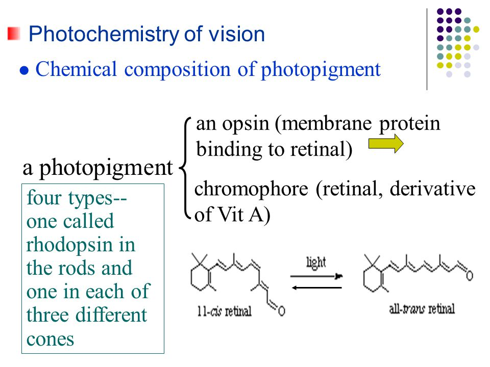 a photopigment Photochemistry of vision
