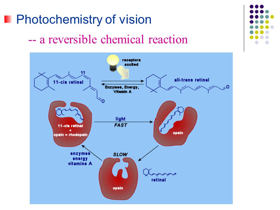 Photochemistry of vision