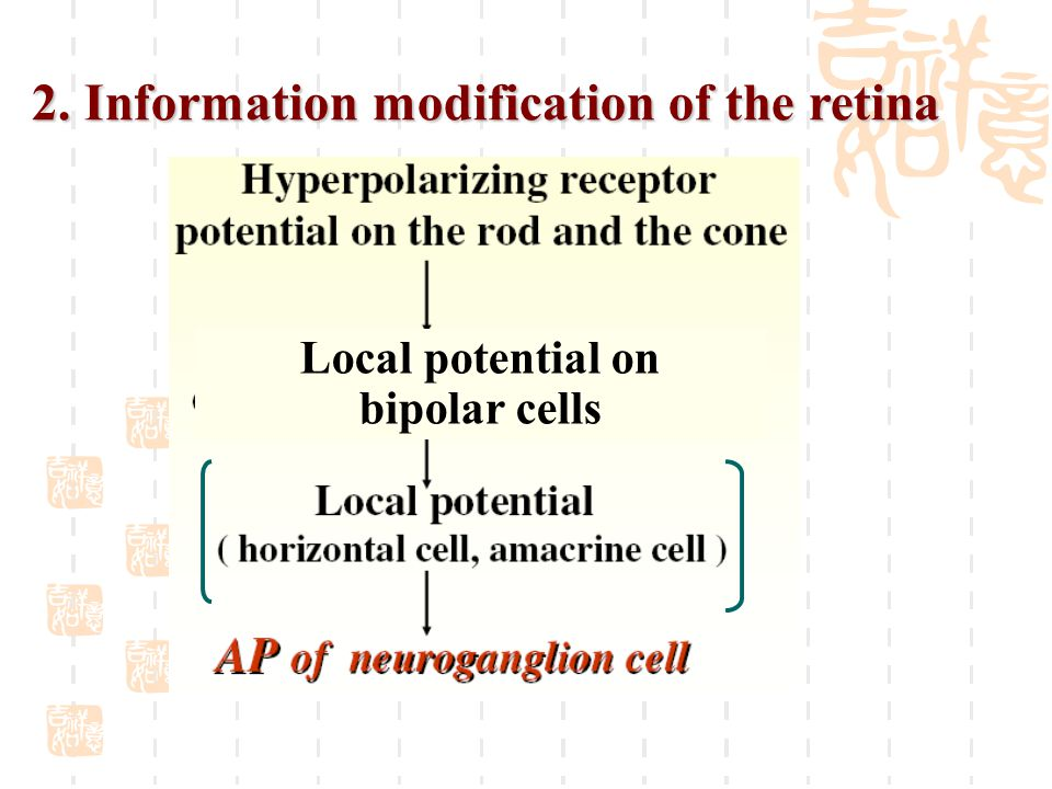 2. Information modification of the retina