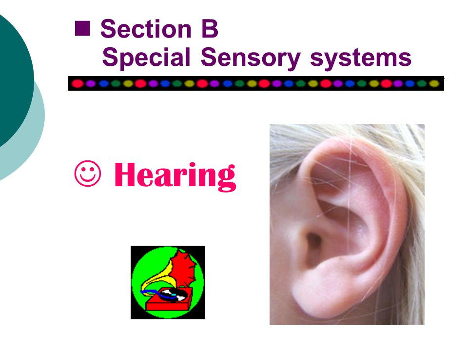 Section B Special Sensory systems Hearing