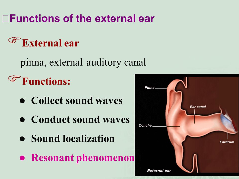 ⅠFunctions of the external ear